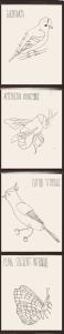 species photo strip